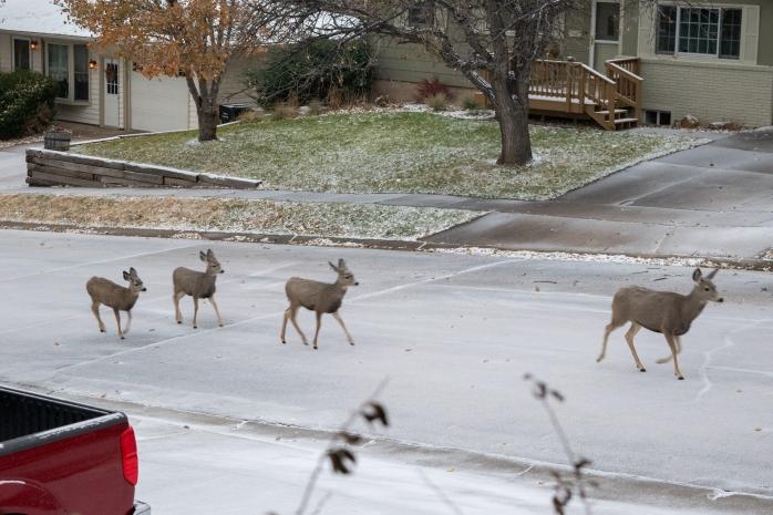 Deer_Traffic.jpg